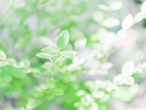 自分が喜ぶものは、環境や人、動物も喜ぶものがいい